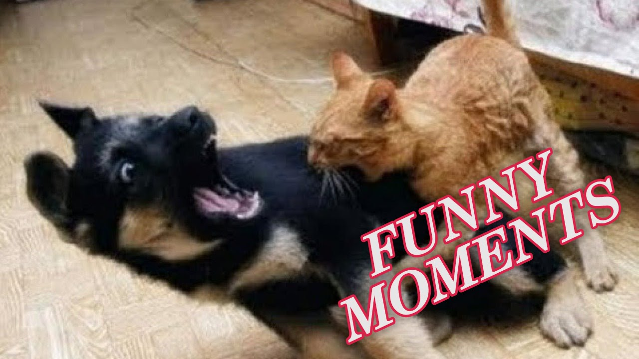 Funny Dogs and Cats Compilation 2016
