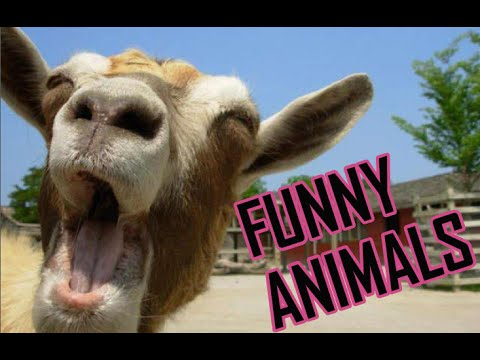 Funny Animals Compilation 2016