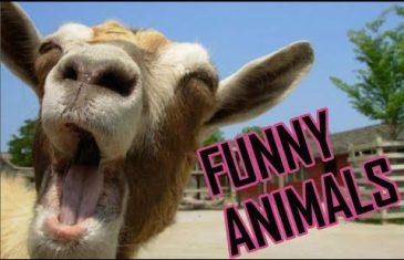 Funny Animals Compilation 2016